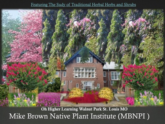 Traditional Herbal Herbs and Shrubs Michael Brown Native Plants Institute Oh Higher Learning Walnut Park St. Louis MO