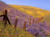 barbed-wire-and-wildflowers-gorman-california-wallpaper