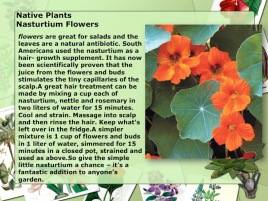 Native Plants Nasturtium Flowers