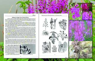 some natural cordage - HempWeed and Fireweed making cordage_Layout 1_Page_2