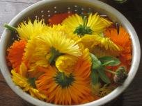 calendula+bowl