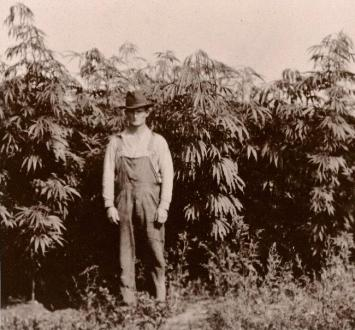 history-of-cannabis-hemp1