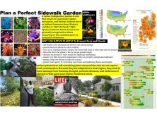 Plan a Perfect Sidewalk garden-all kids